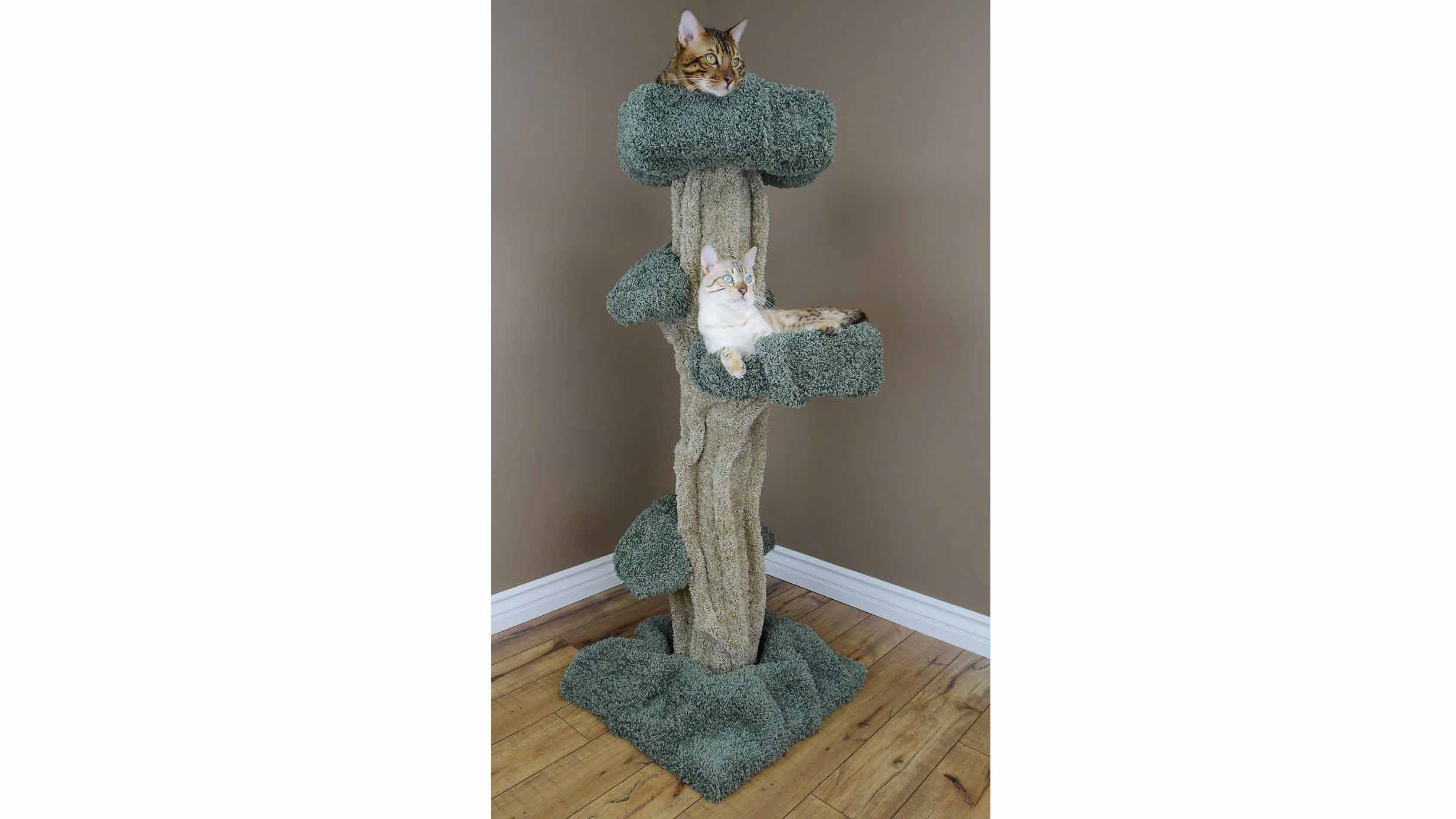 Cat Condos Astonishing Bed Cat Post Tar Along With Home