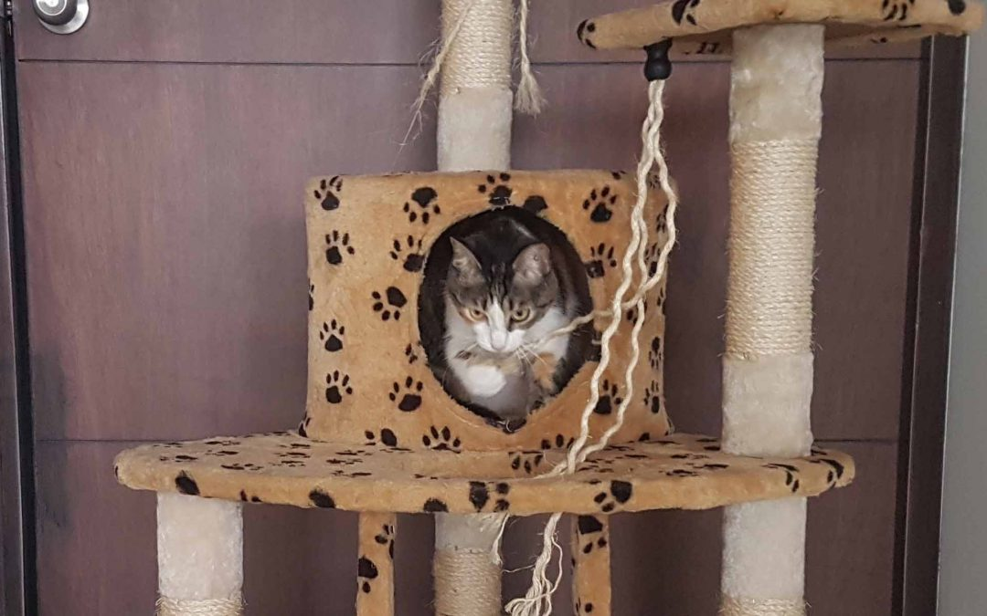 Best Cat Tree – Our Top Pick is Amazing!